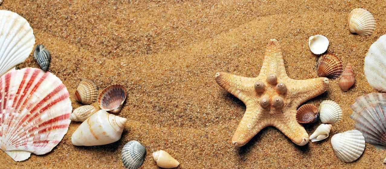 BAG zum Verfall von Urlaubsansprüchen